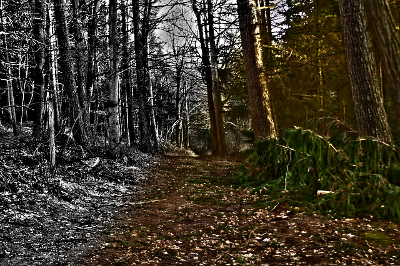 forest-path-267971_640